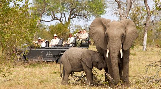 Enjoy daily big 5 Game Drive at Dulini Safari Lodge located in the Big 5 Sabi Sand Game Reserve in South Africa