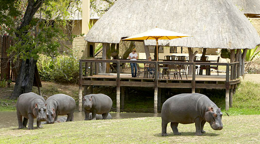 Hippos Arathusa Luxury Lodge Accommodation Arathusa Safari Lodge Sabi Sands Game Reserve Accommodation Booking