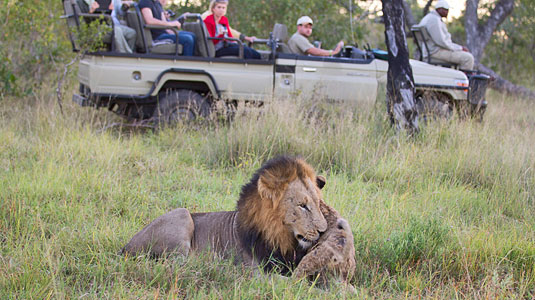 Lion Sighting Daily Game Drives Arathusa Safari Lodge Sabi Sands Game Reserve Safari Lodge Accommodation booking
