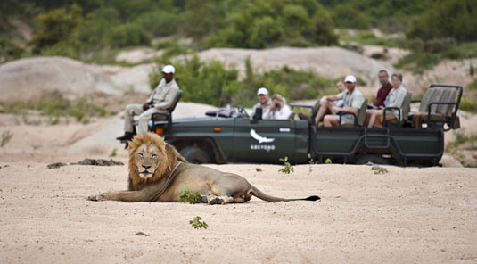Sabi Sand Leadwood Lodge Daily Game Drives Dulini Private Game Reserve Safari Game Lodge Accommodation Bookings