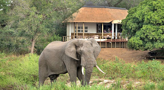 View of Dulini River Lodge with Elephant Bull located in the Big 5 Sabi Sand Private Game Reserve, South Africa