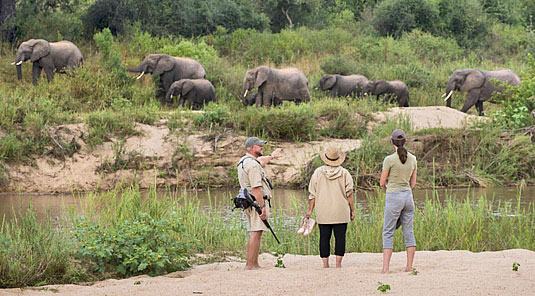 Safari Game walks in the Big 5 Sabi Sand Private Game Reserve located in South Africa