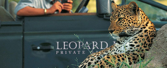 Leopard Sighting Game Drives South African Safari Leopard Hills Private Game Reserve Sabi Sand Game Reserve Accommodation Booking