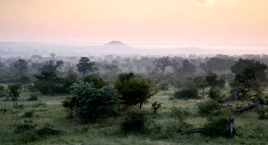 South African Safari Landscape View Luxury Londolozi Game Reserve Sabi Sand Private Game Reserve Accommodation Booking