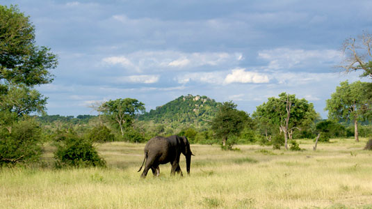 Elephant Sighting Londolozi Game Reserve Luxury South African Safari Sabi Sand Private Game Reserve Accommodation Booking