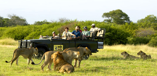 Lion Sighting Game Drives Mala Mala Lodges Mala Mala Private Game Reserve Sabi Sand Private Game Reserve Accommodation Booking