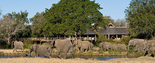 Sabi Sabi Bush Lodge Elephants, Main Lodge Luxury Accommodation Sabi Sabi Private Game Reserve Sabi Sands Reserve