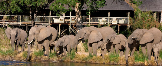 Luxury Accommodation Elephant Herd Sabi Sabi Private Game Reserve Sabi Sands Reserve