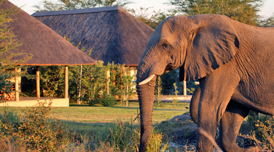Elephant Savanna Private Game Lodge Luxury Accommodation Savanna Private Game Reserve Sabi Sands Reserve