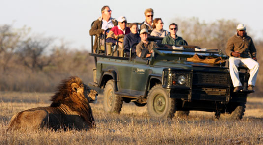 Lion Sighting Game Drives Luxury Accommodation Savanna Private Game Reserve Sabi Sands Reserve Accommodation bookings