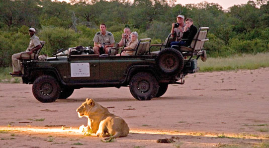 Lion Sighting daily big 5 game drives Sabi Sands Luxury Safari Lodge Simbambili Game Lodge Luxury Accommodation bookings Sabi Sands Reserve